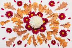 Composition of dry leaves and red and white flowers with the petals on a ligh Stock Photos