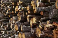 The chopped firewood Stock Photos