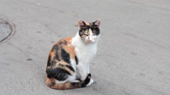 Homeless cat sitting on the street Stock Footage
