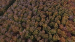 Descent into forest through canopy Stock Footage