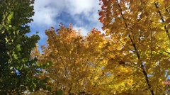Autumn colors at Parcul Central Stock Footage