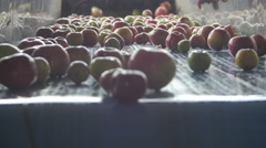 Fresh apples passing on the conveyor belt, juice production by Cutter. Arkistovideo