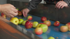 Workers separated dirt and peduncles, apples on the conveyor belt by Cutter Arkistovideo
