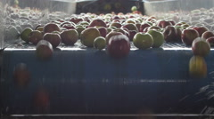 Fresh apples passing on the conveyor belt, fruits close up by Cutter. Arkistovideo