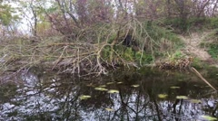 Tree reflection on a small river Stock Footage