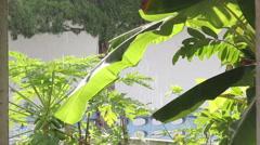 Raining on the banana tree in the sunshine Stock Footage
