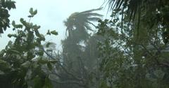Damaging Hurricane Winds Lash Coastal Area Stock Footage