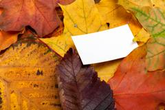 Autumn multicolor leafs with empty price card Stock Photos