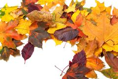 Autumn multicolor maple leaves Stock Photos