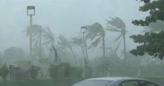 Palm Trees Sway And Thrash In Powerful Hurricane Wind Stock Footage