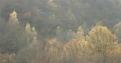 Spectacular autumn trees illuminated by sunlight-panoramic view Stock Footage