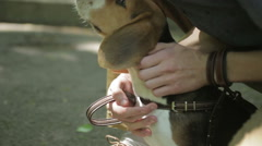Young man walking with his dog in summer park. Man pats the dog in the forest. Stock Footage