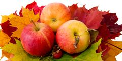 Autumn maple leaves and three apples. Stock Photos