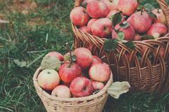 Baskets with apples harvest in fall garden Kuvituskuvat