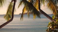 Panning video of palm trees at Maho Bay, St John Stock Footage