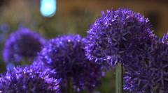 Flowers night with drops  Stock Footage
