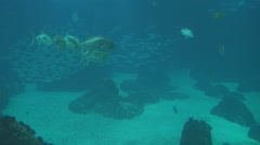 Tiger sand shark and fish Stock Footage