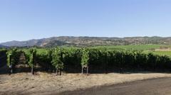 Vineyard Napa Valley Stock Footage