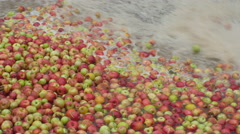 Washing apples in the factory for juice production by Cutter. Stock Footage
