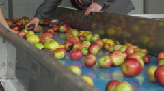 Workers removed dirt and peduncles, apples on the conveyor belt by Cutter. Arkistovideo
