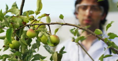 Tomato research. concept of plant research and the future  Stock Footage