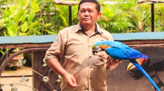Man Guide Holds Blue-gold Parrot on Arm Feeds in KL Bird Park Stock Footage