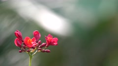 Beautiful 4K Flower Footage with Bokeh Background Stock Footage