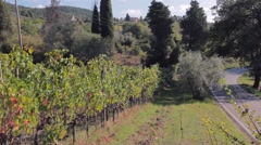 The road through hills of Tuscany, and grapevine with ripe bunches of grapes Stock Footage