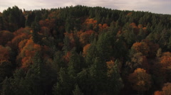 Aerial Flying Backwards Over Forest Trees with Orange and Green Fall Colors Stock Footage