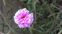 Beautiful Pink Flower Bokeh Background 4K Stock Footage