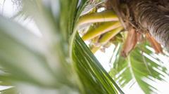 Palm tree leaf close up Stock Footage