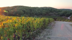 Beautiful panoramic view of the sunset over the vineyard on the hill Stock Footage
