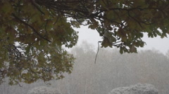 First snow and oak leaves Stock Footage