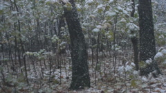 First snow and leaves, park Stock Footage