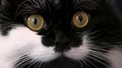 Black And White Cat With Orange Eyes And White Whiskers Looks Towards The Camera Stock Footage