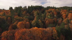 Helicopter View Coming Down on Forest with Bright Fall Colors Stock Footage