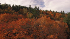 Breathtaking Autumn Season Aerial Flying Low Over Trees with Colorful Orange Stock Footage
