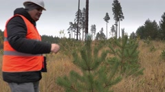 Forester walking and checking new growth pine Stock Footage