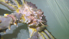 Swim under water with crab Stock Footage