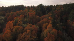 Slow Floating Aerial Above Thick Forest Trees with Vibrant Fall Colors Stock Footage