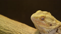 Bearded dragon slow motion blink of an eye Stock Footage