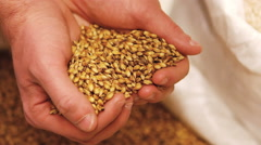 Brewer spilling grain from hand in sack Stock Footage