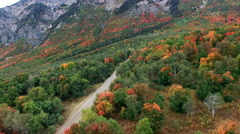 Aerial view of Fall color on landscape of foliage. Stock Footage