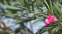 Pink Flower Plant Nature Background 4K Footage Stock Footage