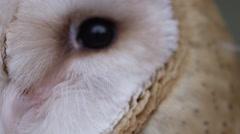 Barn owl macro close up of eye balls Stock Footage