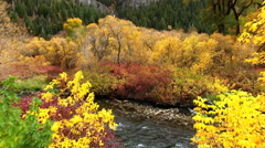Flying over river through trees in Fall color Stock Footage
