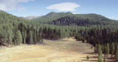 Aerial over giant forest of trees in Lake Tahoe Stock Footage