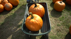 Two pumpkins in a cart Stock Footage