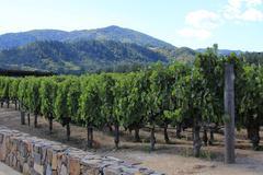 Vineyard of Napa in California. Stock Photos