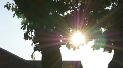 Magic color sun's rays light with flare pass slow through trunk trees Stock Footage